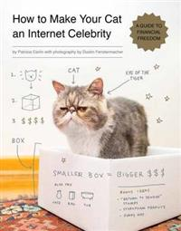 how-to-make-your-cat-an-internet-celebrity